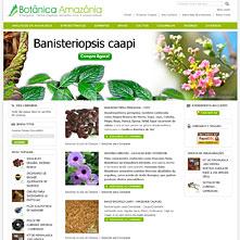 Botânica Amazônia, enteógenos, plantas sagrados, sementes sagrados, ervas espirituais e medicinais, incenso resina natural | BotanicaAmazonia.com.br